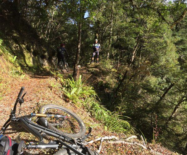 Moerangi Trail in Whirinaki Forest